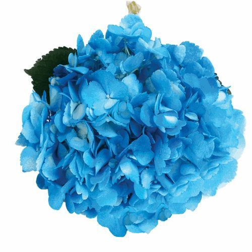 Blue flowers delivered Hochiminh city